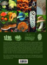 4capa diz funghi