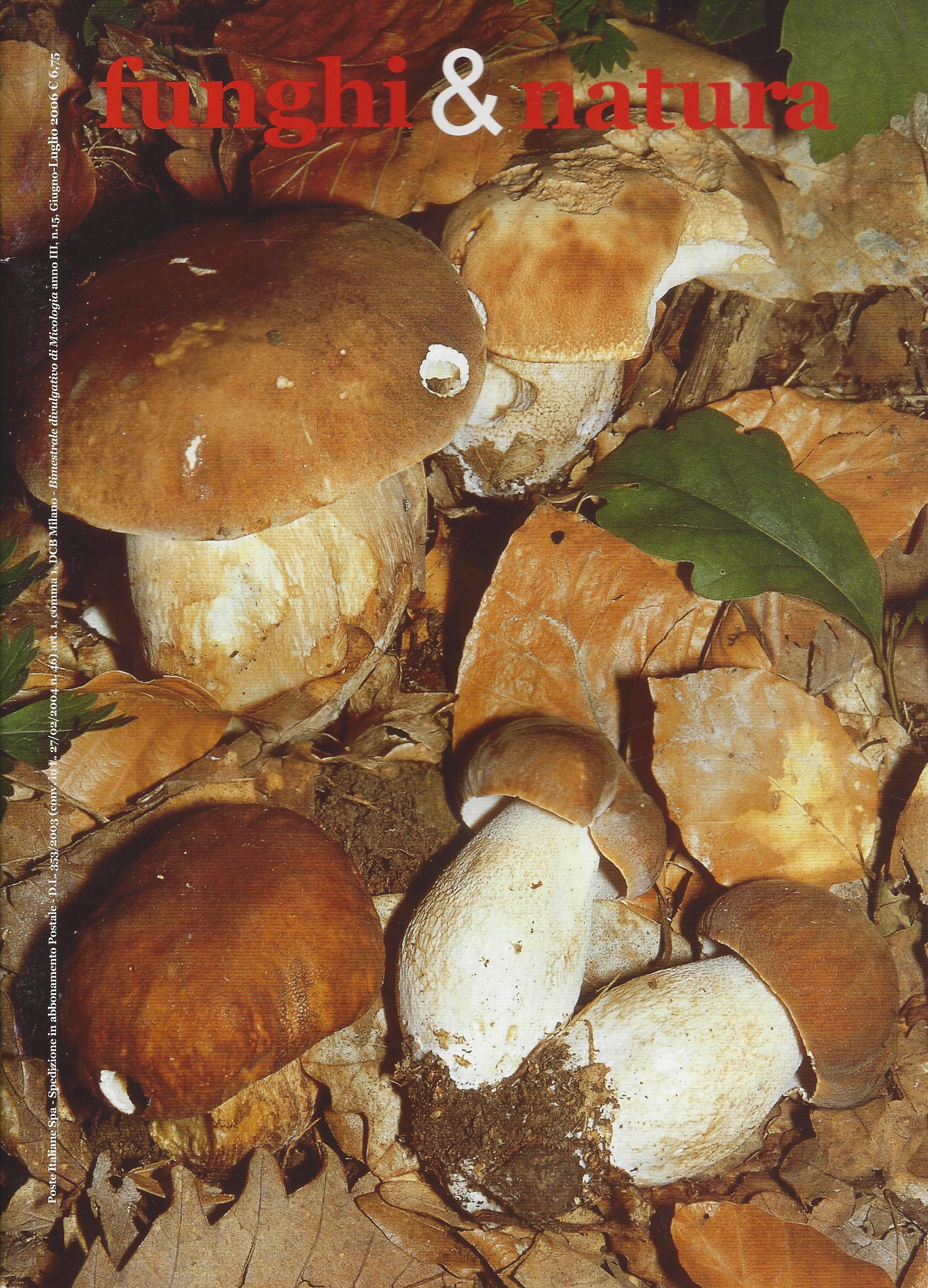 Funghi e natura 15