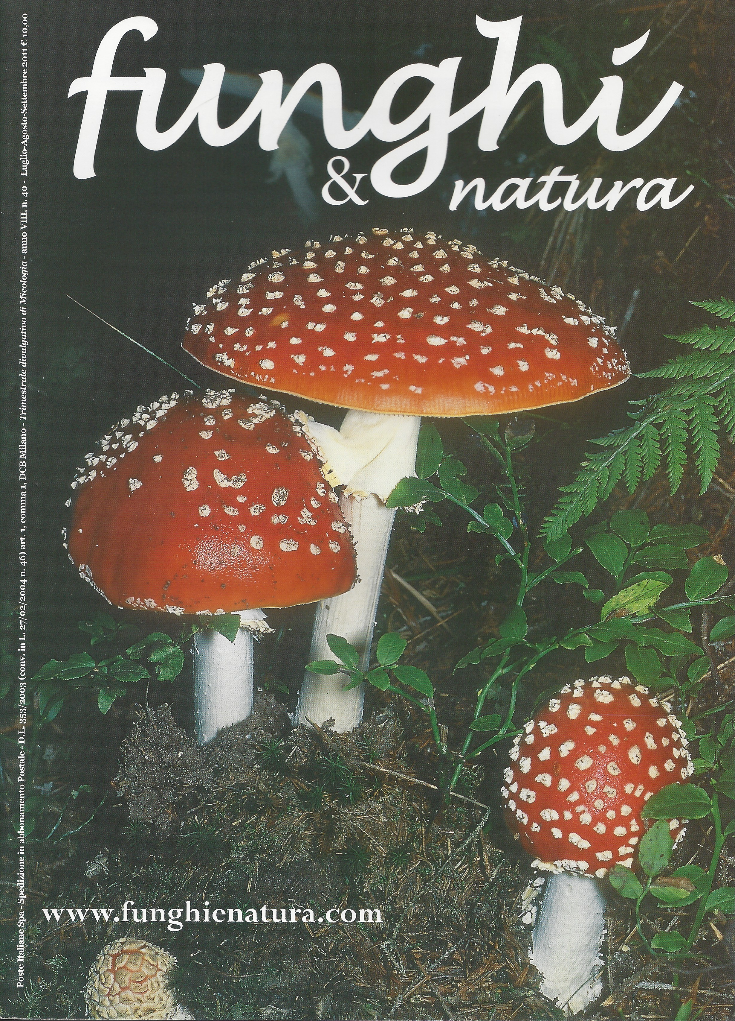 Funghi e natura 40